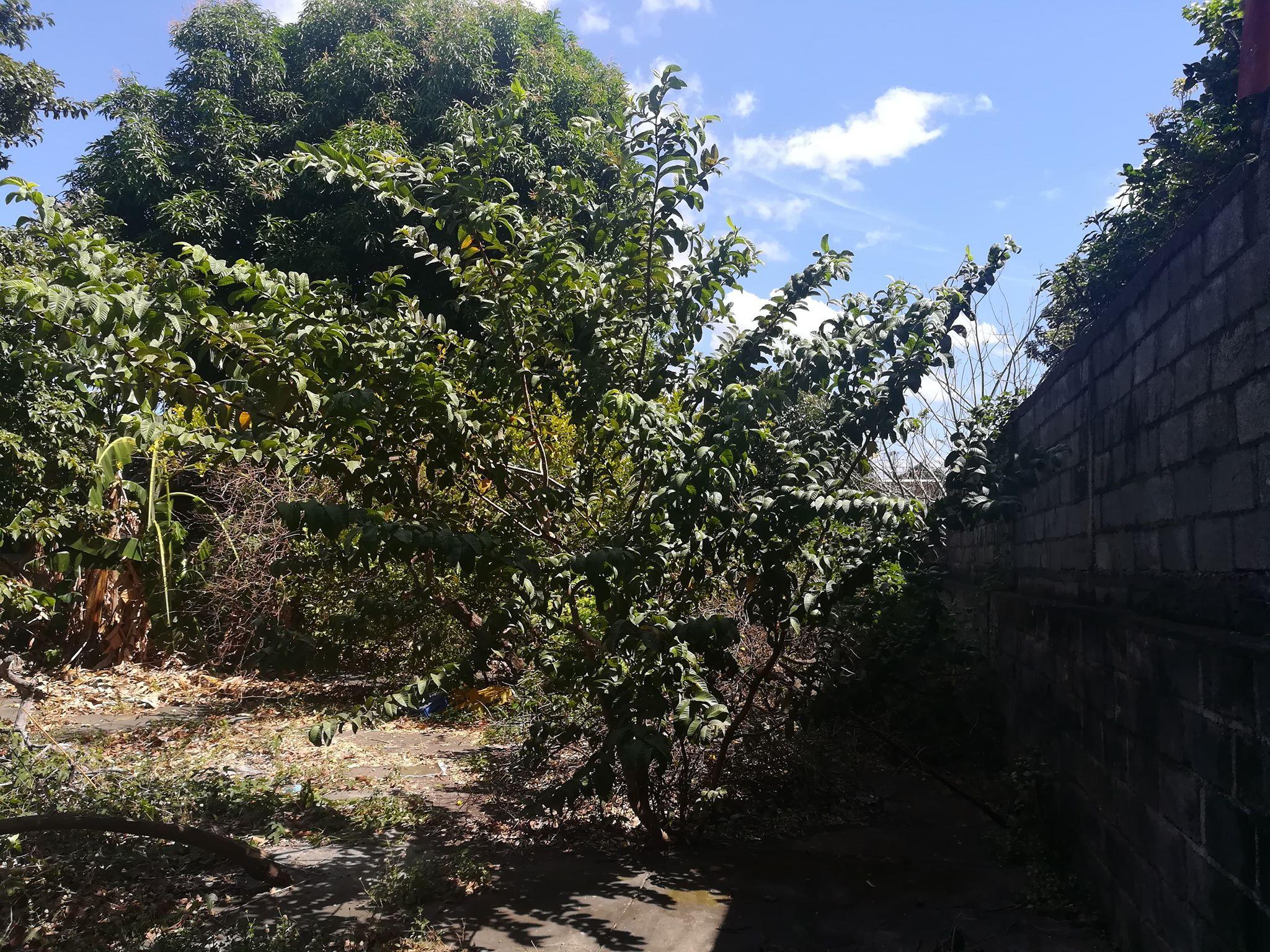 monseñor-lezcano-kmc-bienes-raices-13736543 (11)